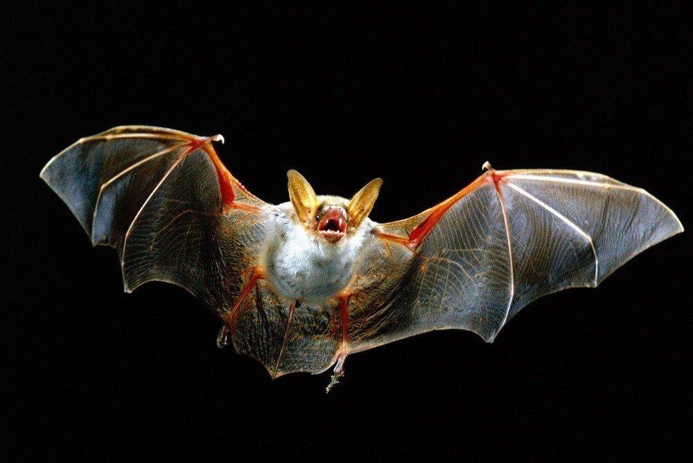 можно картинки с изображением летучих мышей сейчас