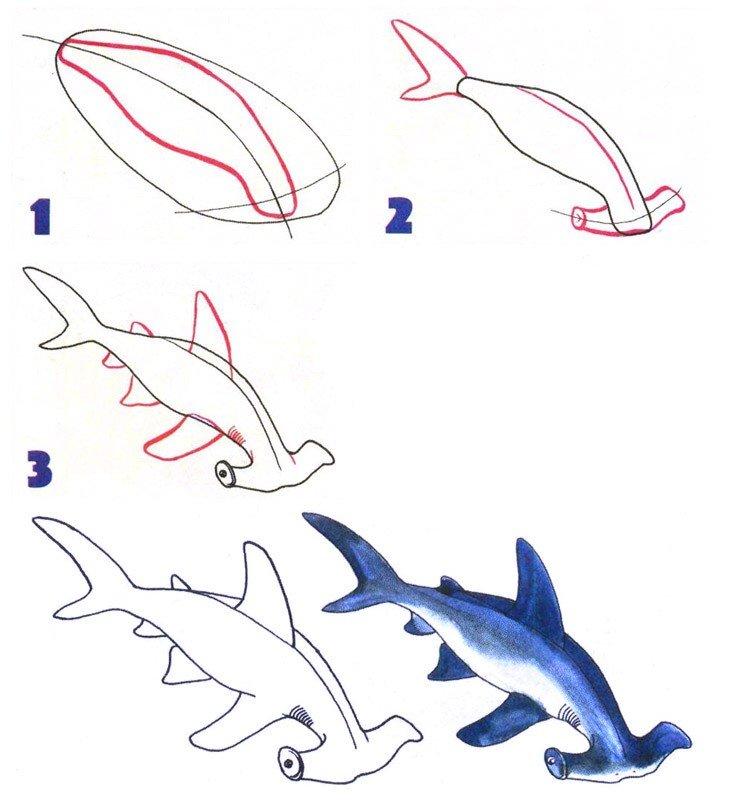 акула картинки поэтапно самые важные моменты