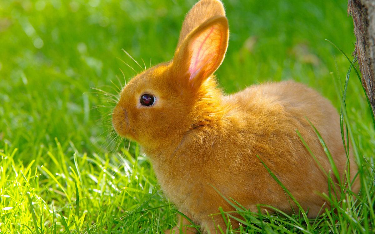 Картинка кроликов, картинки анимация открытки