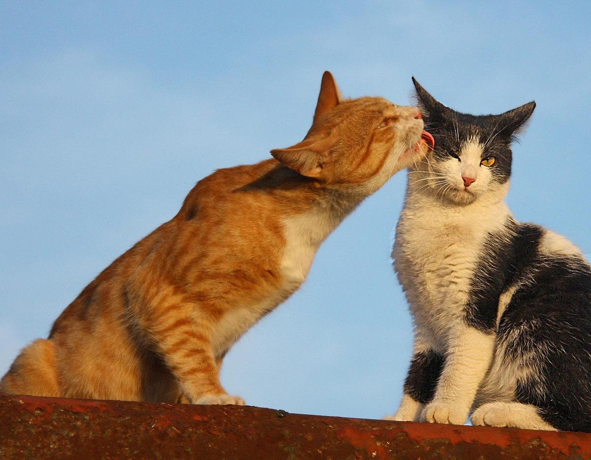 Мартовский кот картинки прикольные с надписями