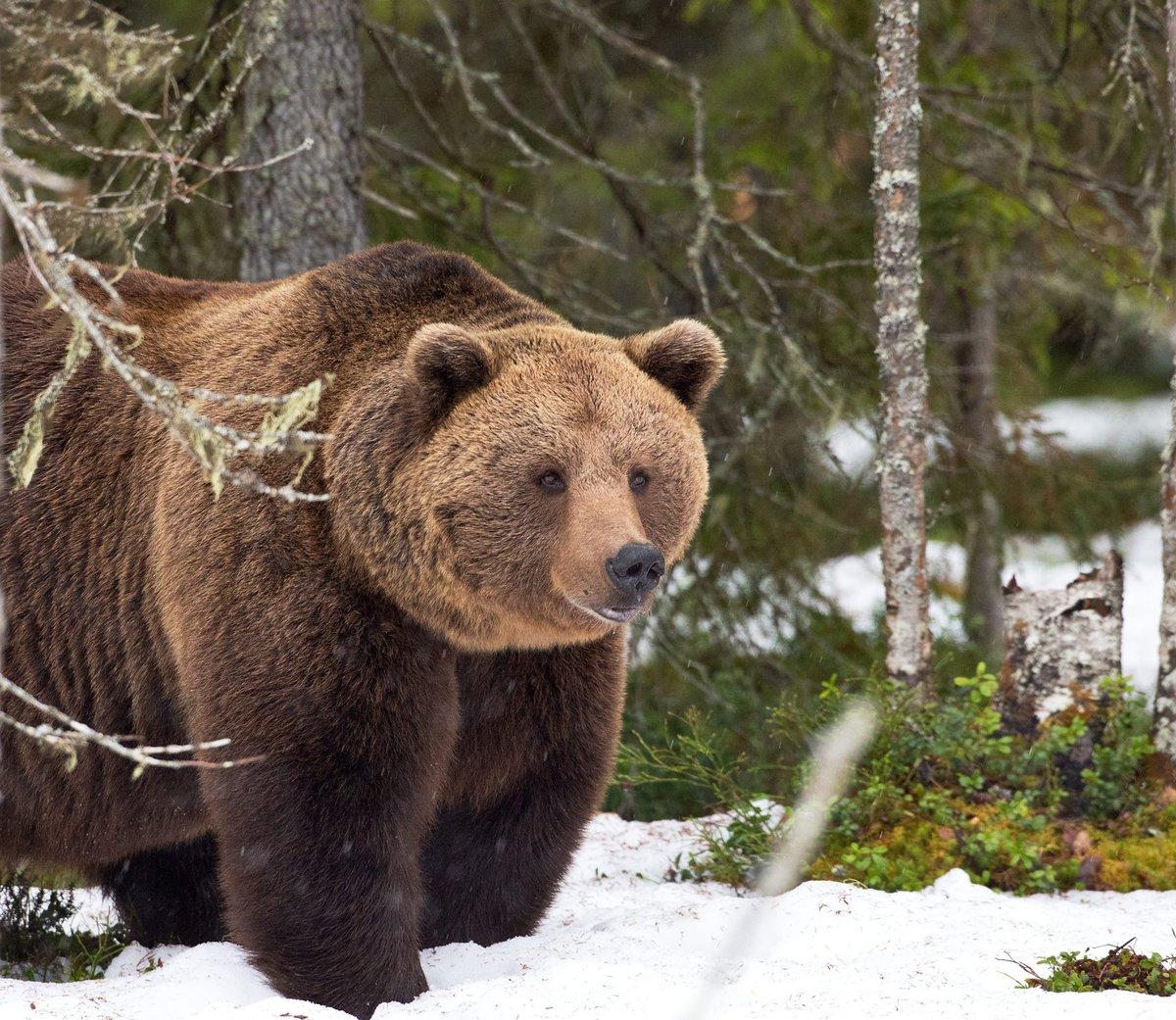 Картинки животный мир россии