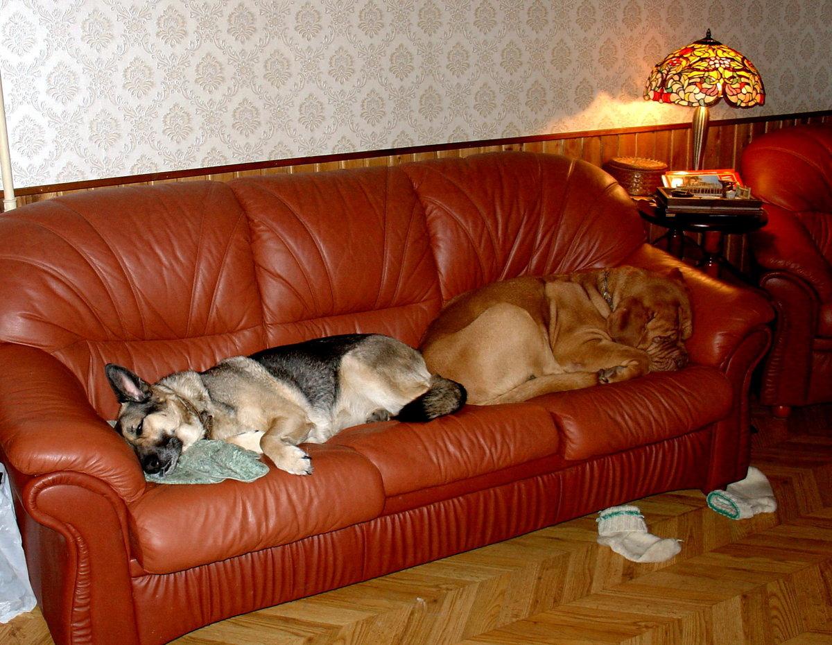 Смешные картинки с диванами, рождение