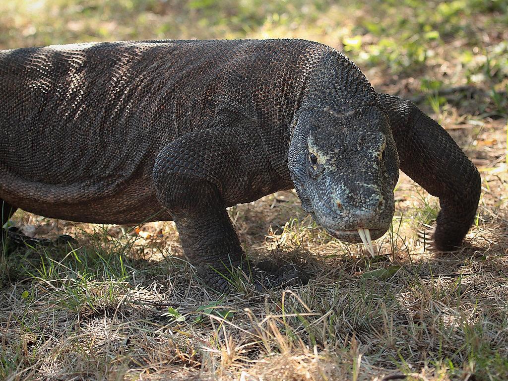 стоп самые большие животные мира фото обои