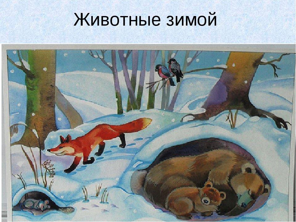 Картинки кто как зимует средняя группа
