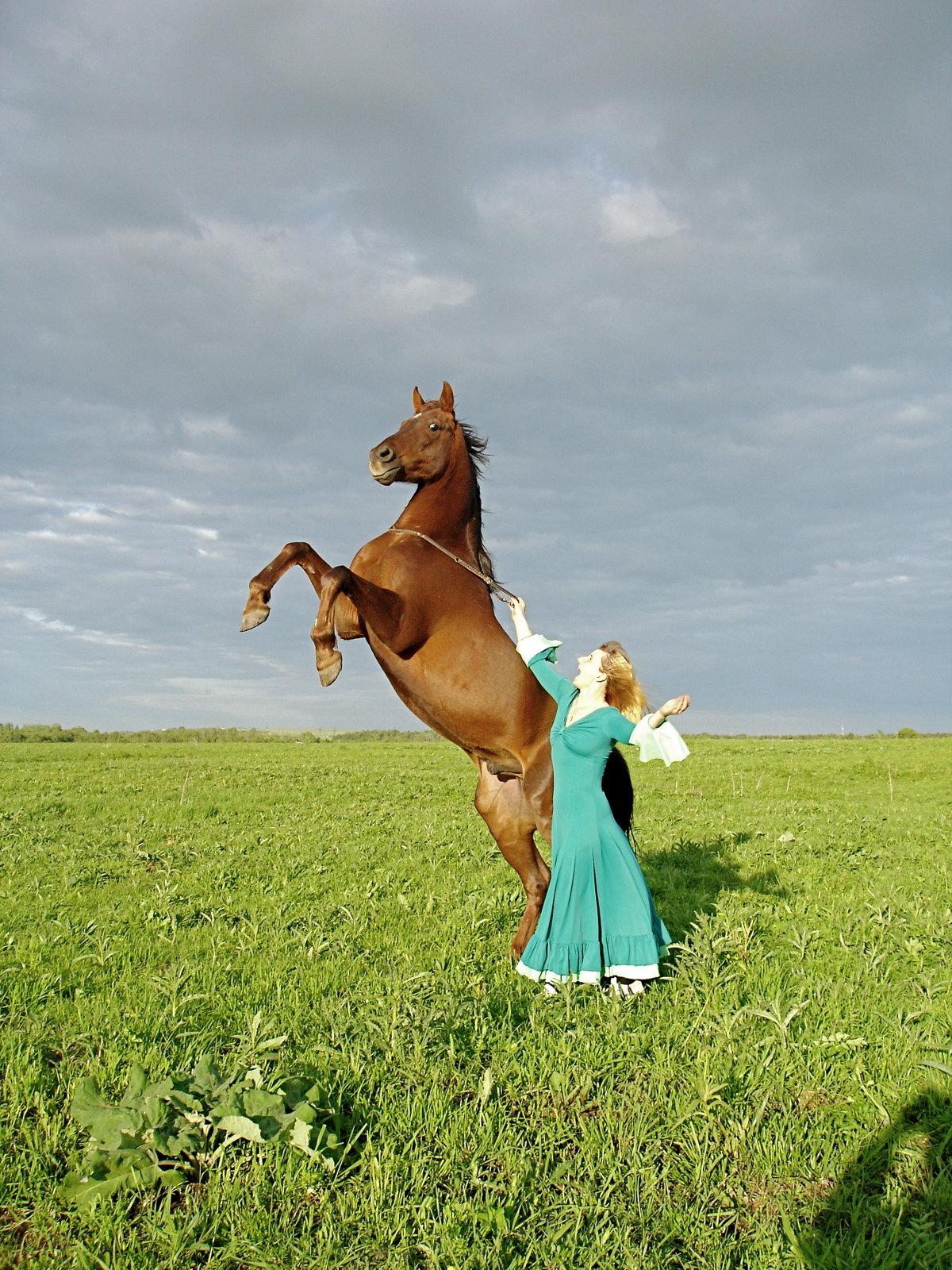картинки конь танцует был популярен