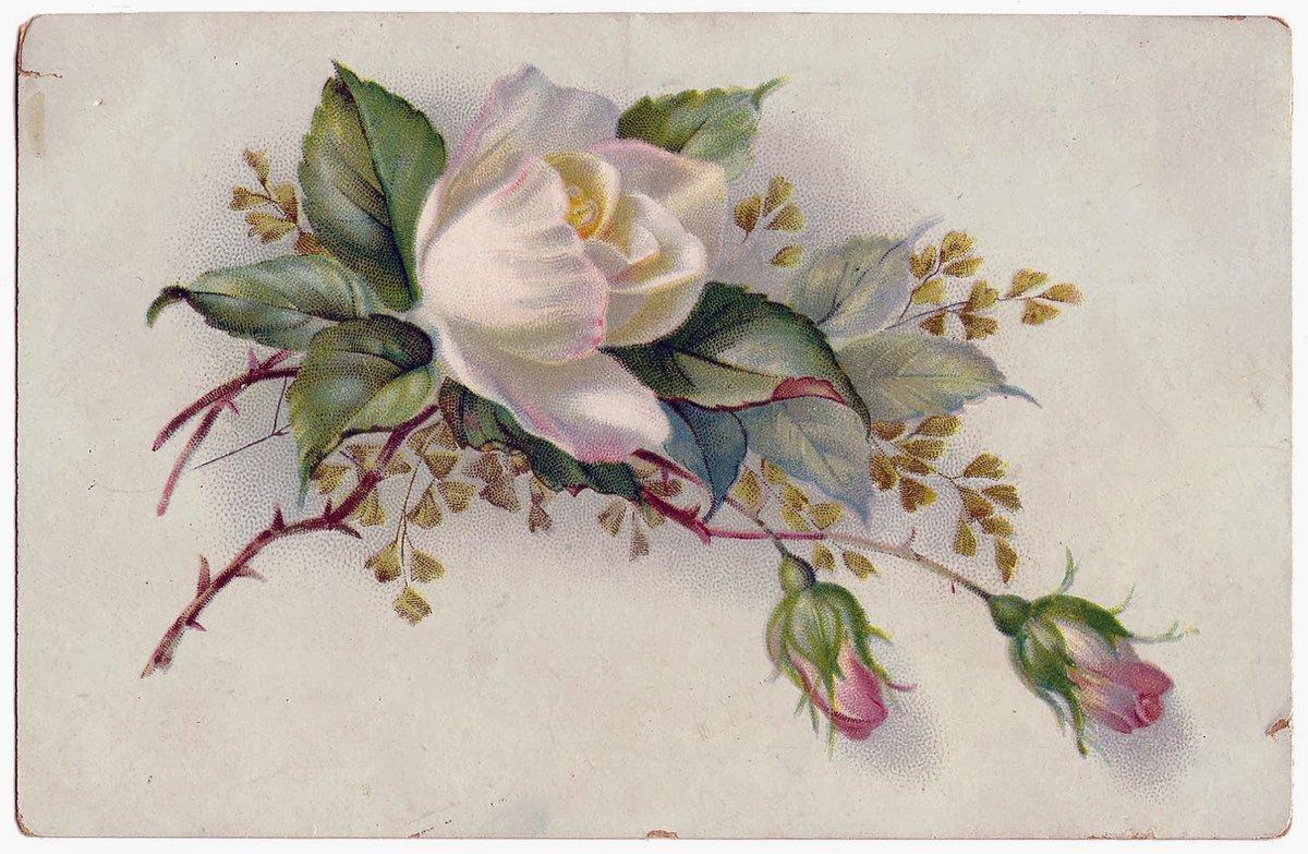 Винтажные рисунки картинки, старинные открытки красивая