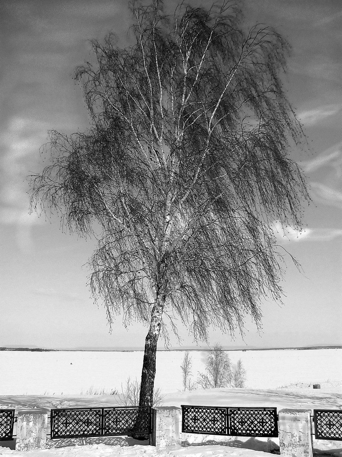 картинки как деревья гнет ветер физико-механическим