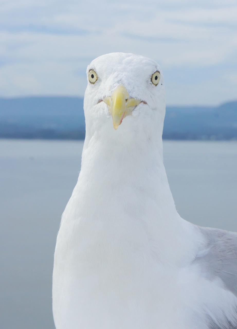 Смешные картинки чайка