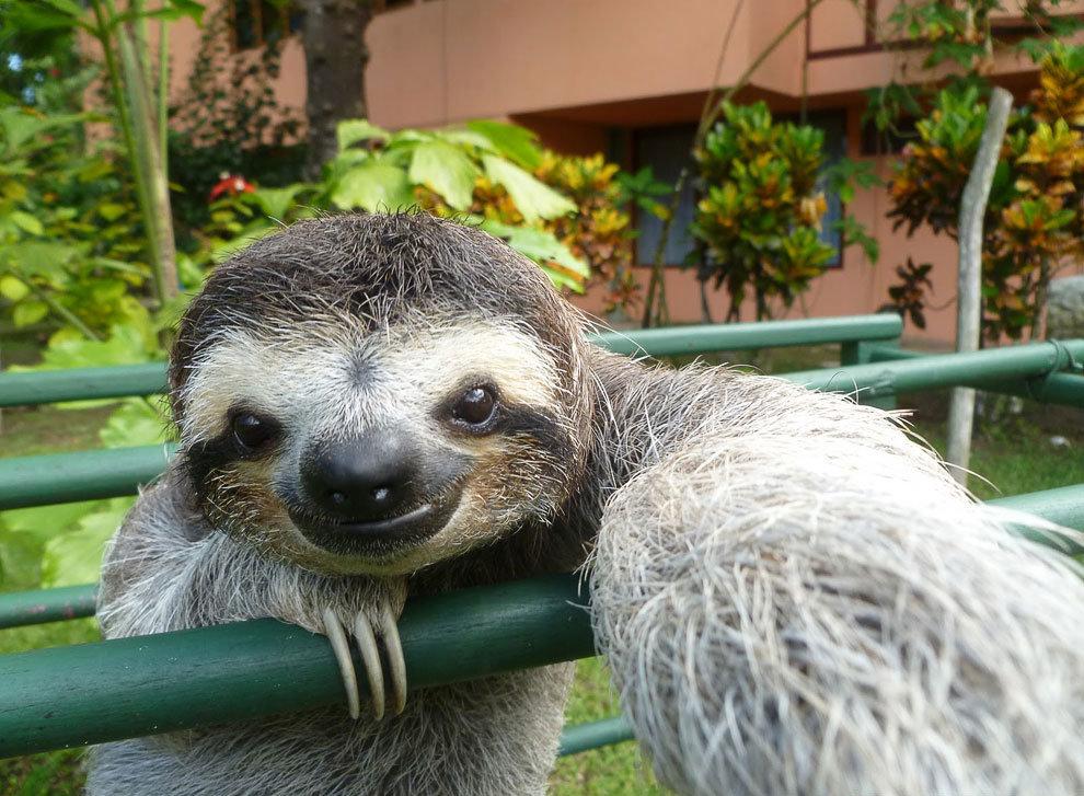 Картинка ленивец смешная, марта открытки