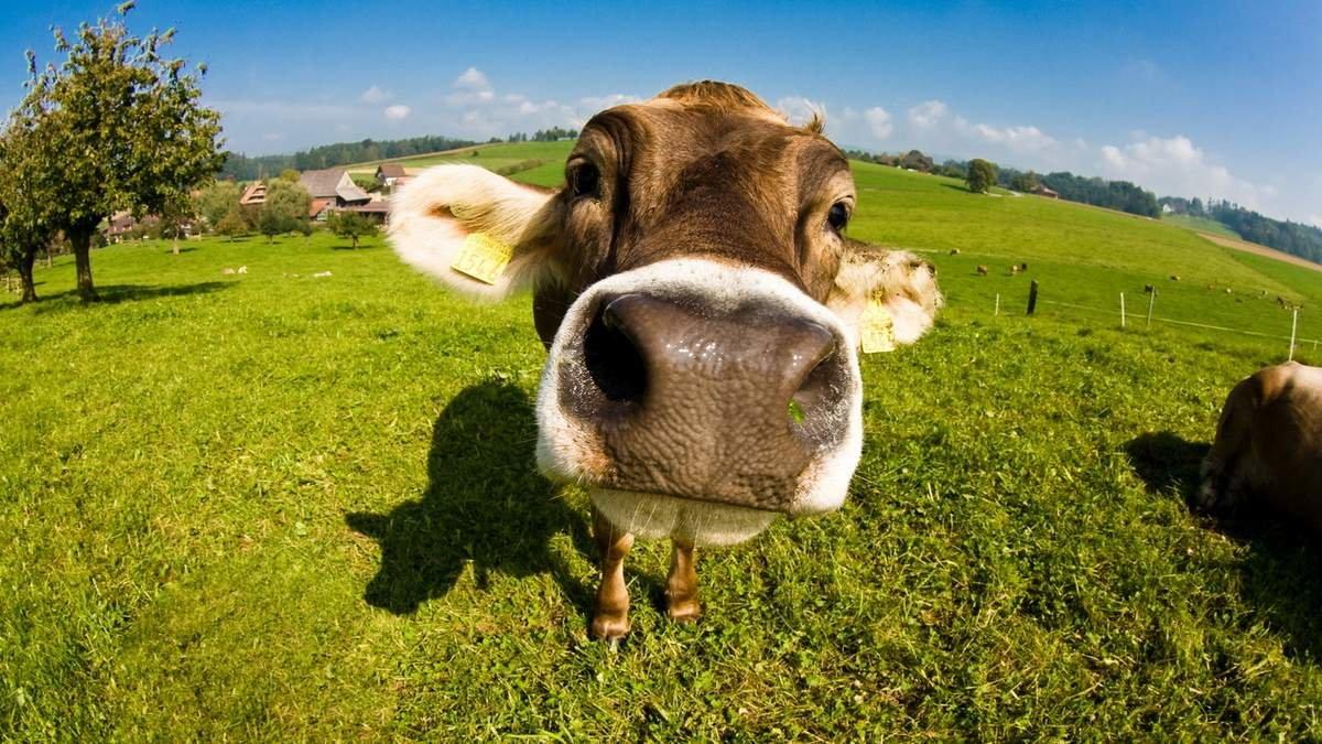 Прикольные картинки с сельскохозяйственными животными, днем рождения для
