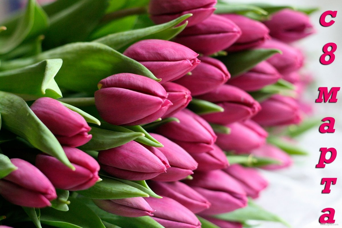 Открытки с тюльпанами фото 8 марта