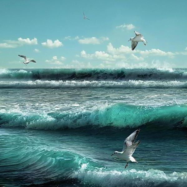 Открытки с морем чайки