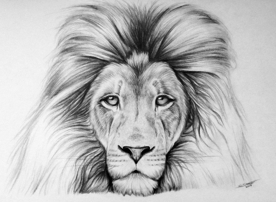 подходящую картинка льва рисунок легкие ней