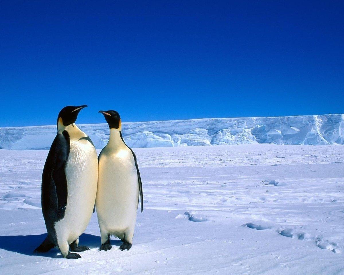 Il pinguino scommesse