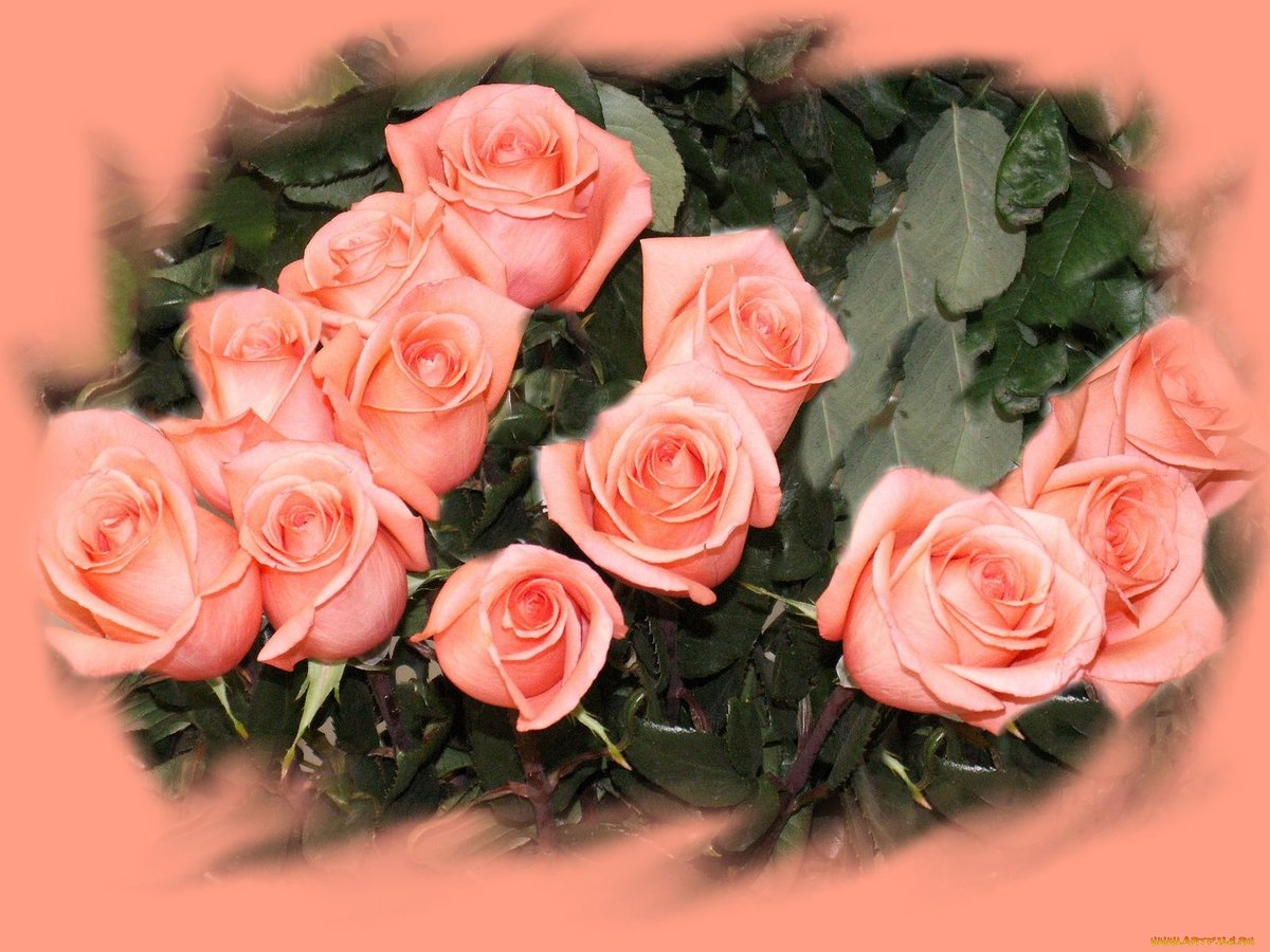 Мини открытки розы, годовщину