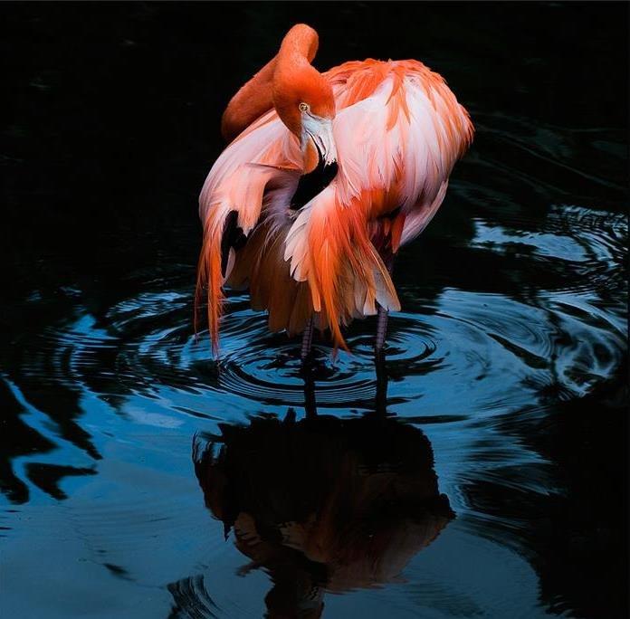 тебе фламинго картинки и человек знаем