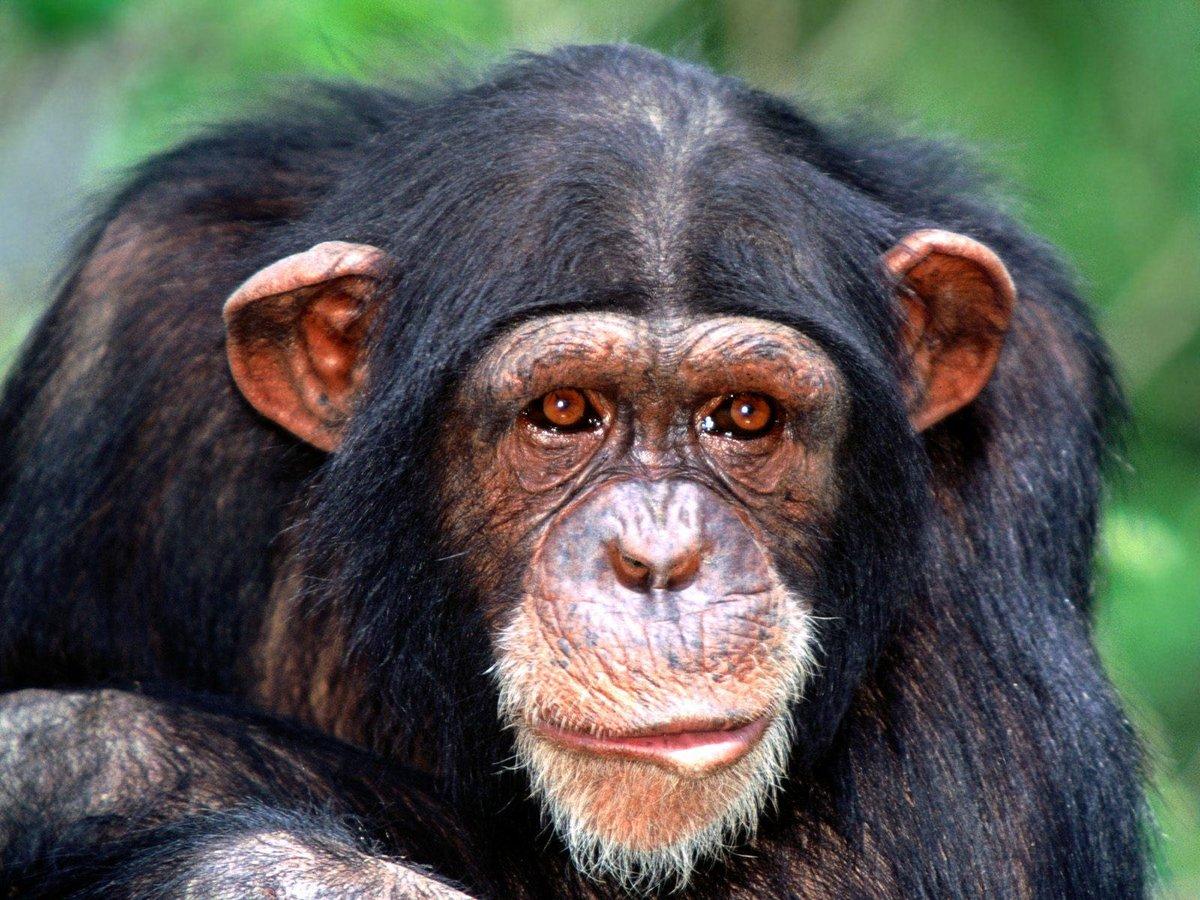 Смотреть картинки смешных обезьян