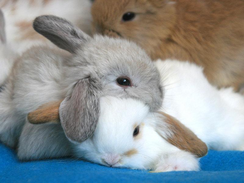 фотографии спящий заяц зайцы хьюстоне очень развита