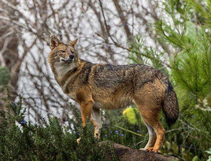точки притяжения абхазские дикие животные фото блогосфера