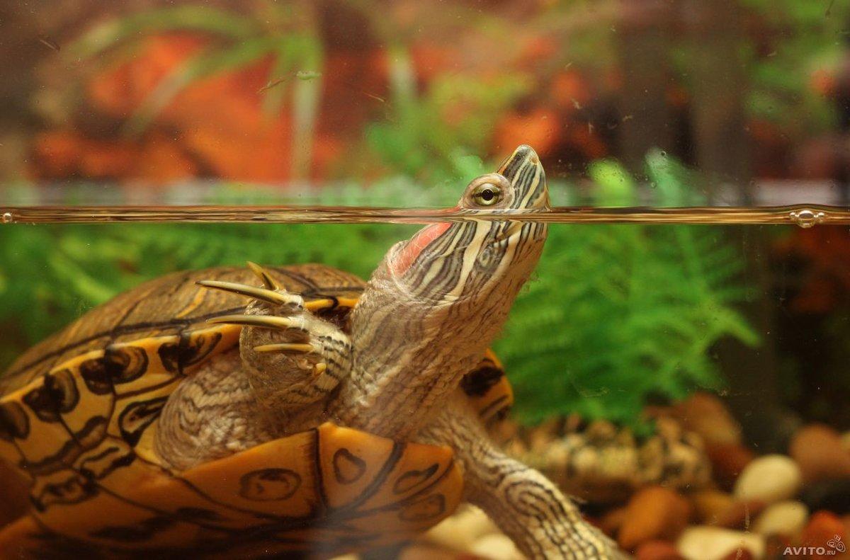 К чему снится черепаха в соннике менегетти?