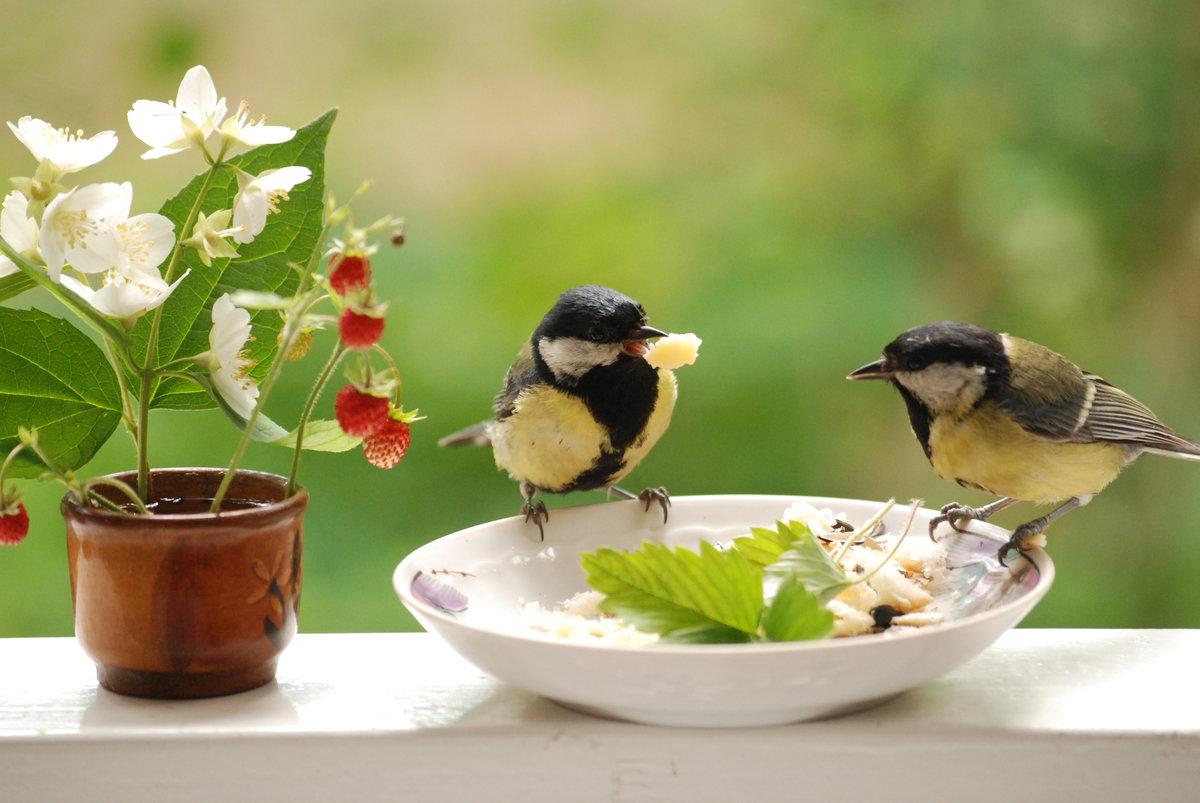 Мне, картинки доброе утро прикольные с животными и птицами