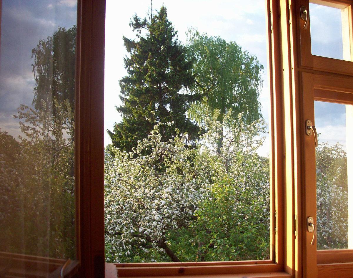 Картинки береза за окном