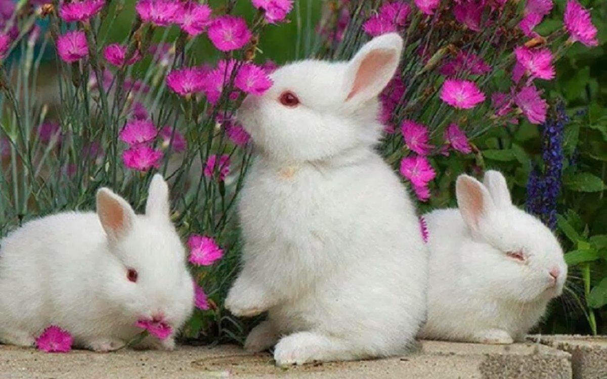 Картинки красивые зайчики, вербное рисунки как