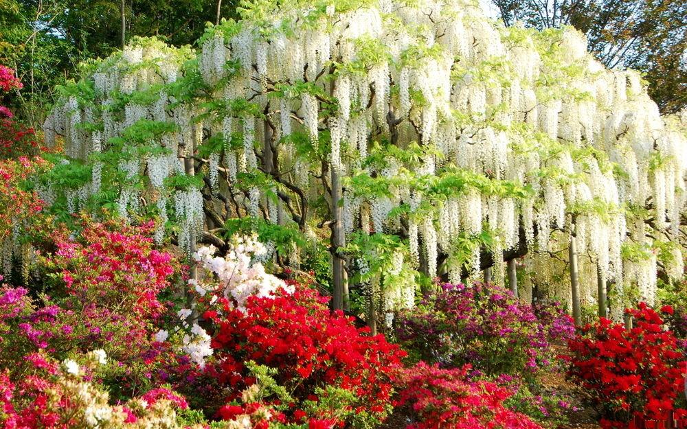Деревья с красивыми цветами фото