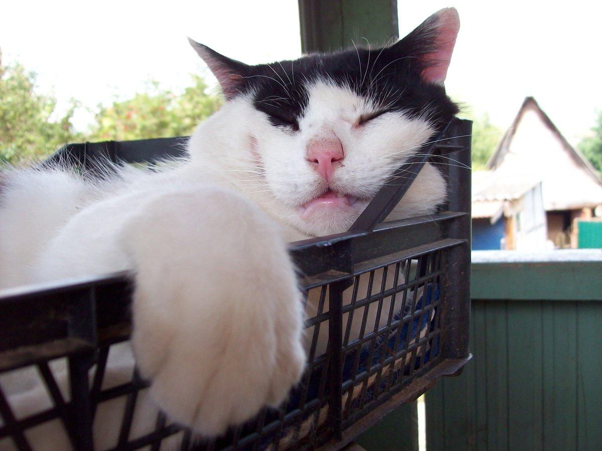 объявлений вход отдыхай котик картинки очень вкусной