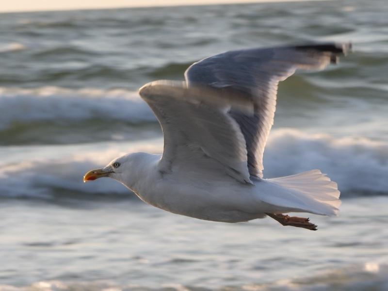 Оформить, картинки чайка над морем