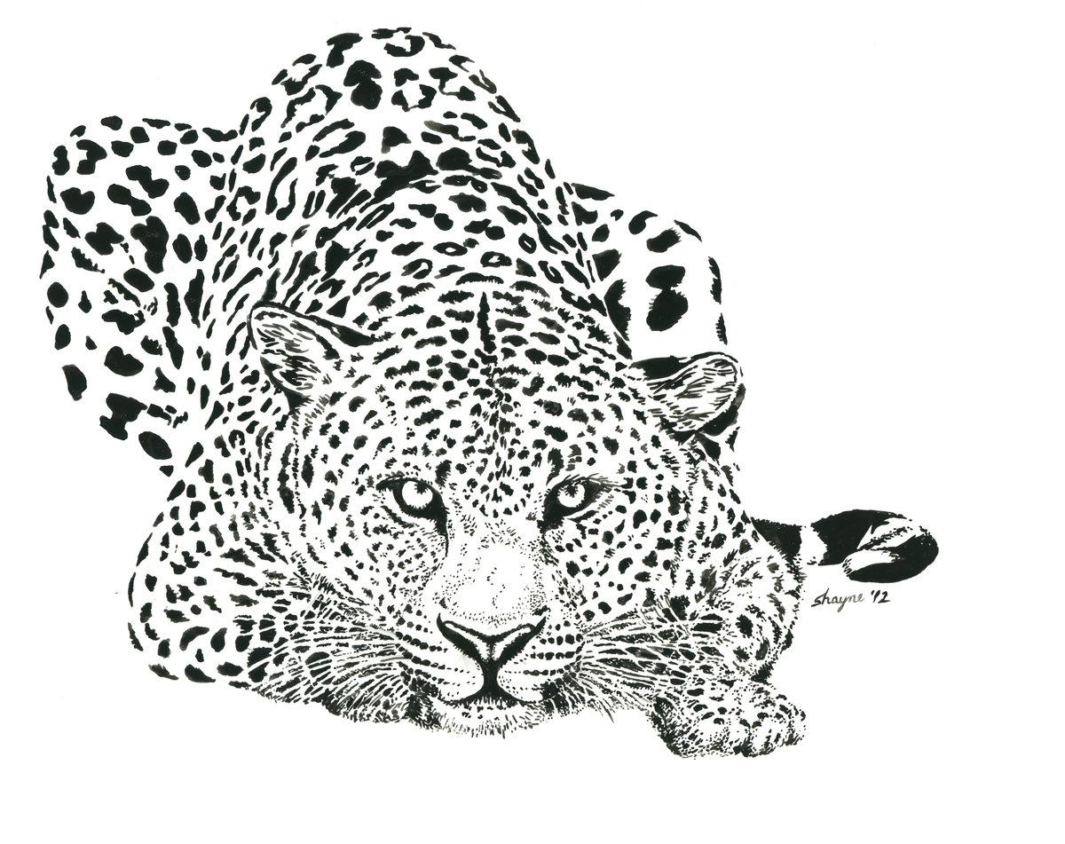 леопард рисунок карандашом сказали