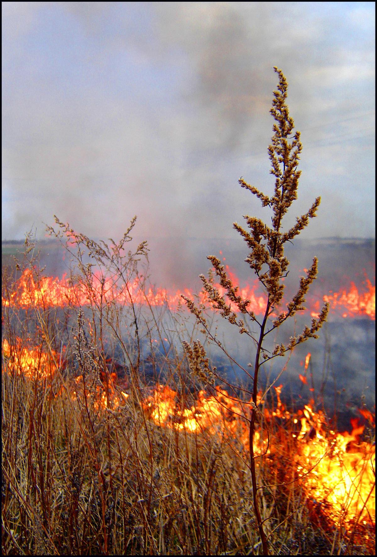 картинка степного пожара митрофанова еще