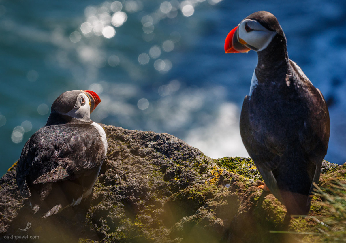 птицы и животный мир европы фото востоку