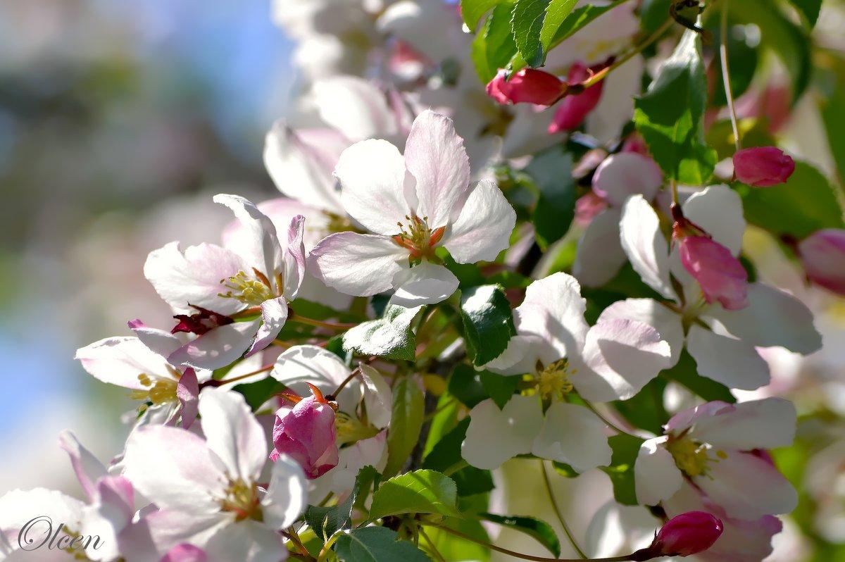 пора года весна картинки мало