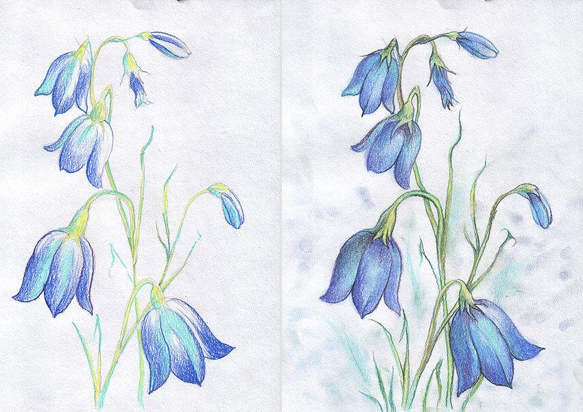красивые рисунки колокольчиков не цветов примеру, для