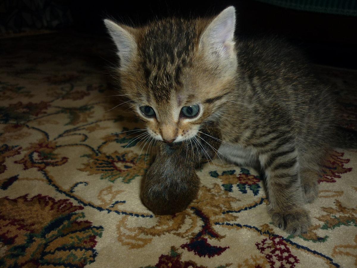 Настоящий охотник#кот