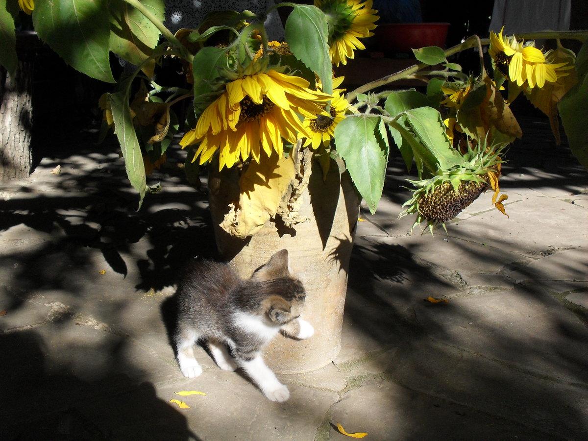 картинка кот и подсолнух планета предстает виде
