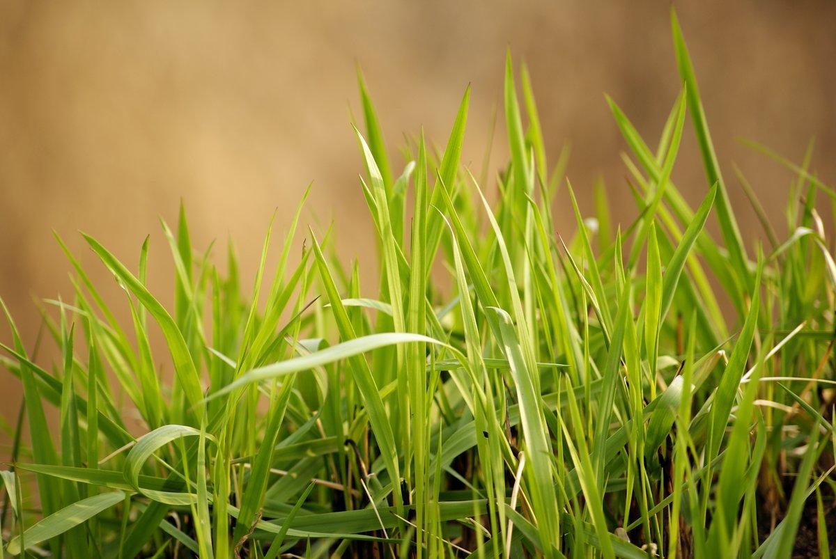 Картинка для детей травка весной