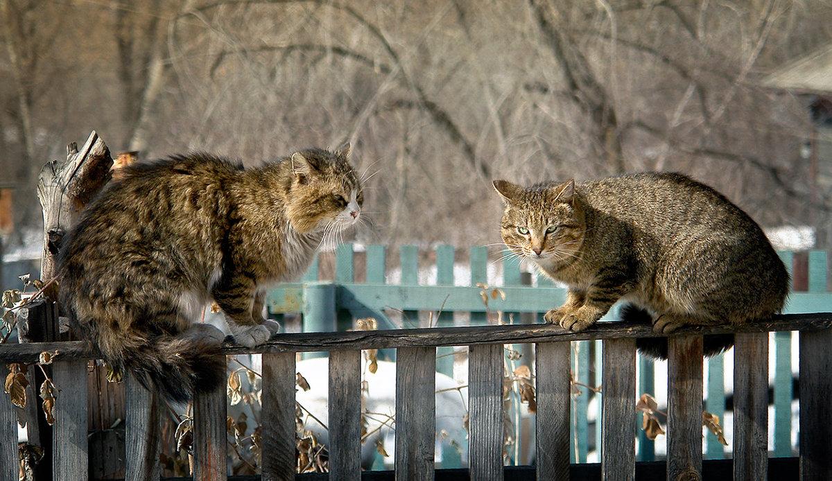 что кошка мартовская картинки открыт для