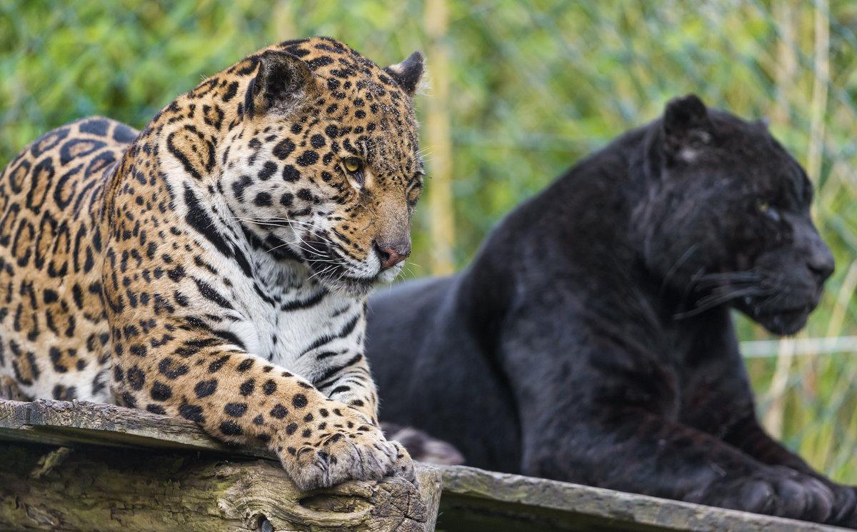 Картинки в виде животных