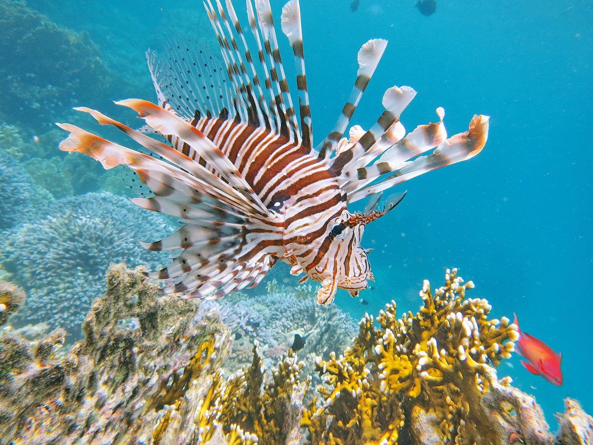 паштет телячьей фото ядовитых рыб египта имеет древнюю историю