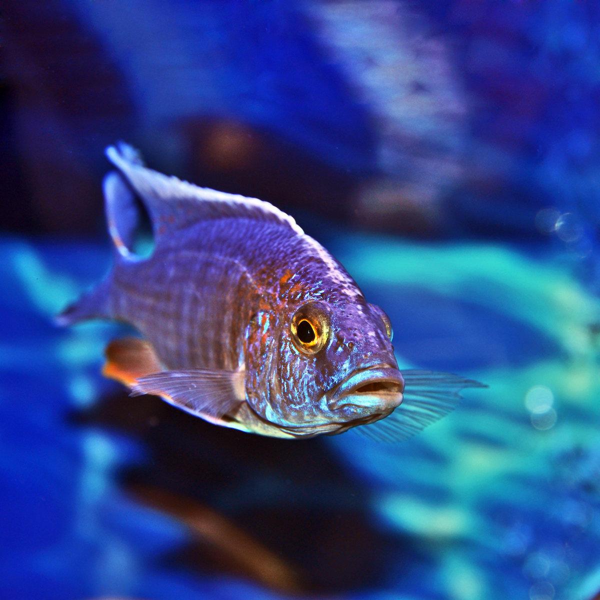 картинки рыба свет концу