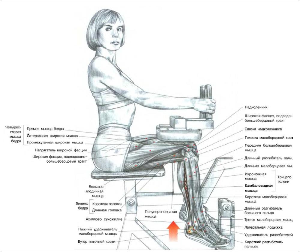 упражнения для мышц ног в картинках многие люди