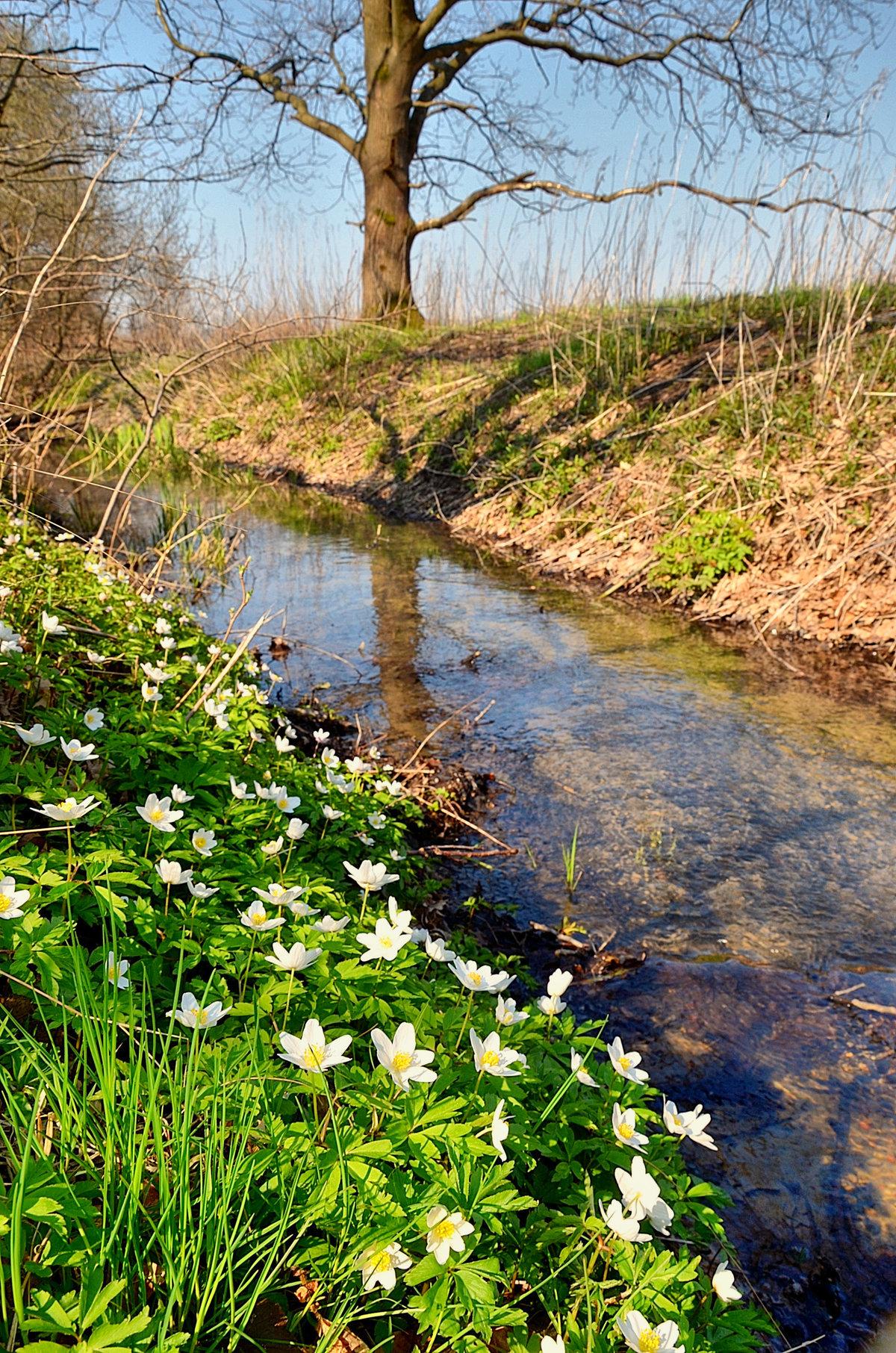 Картинки на тему ручьи