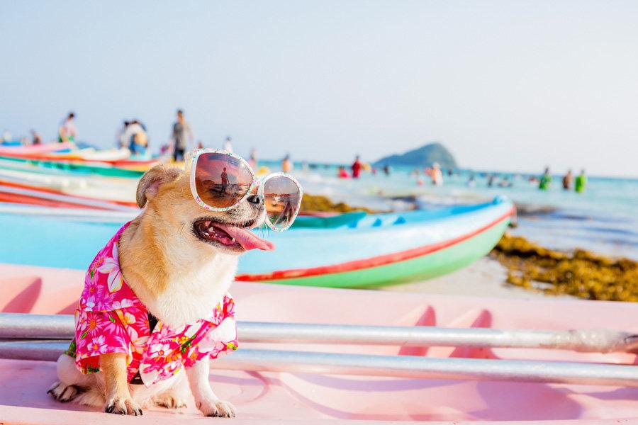 Смешные животные на пляже картинки, лучшими