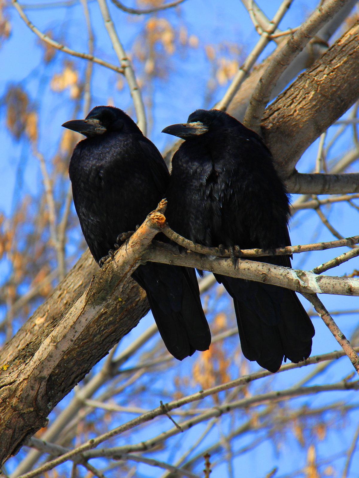 красавицы картинки первые птицы весны празднику