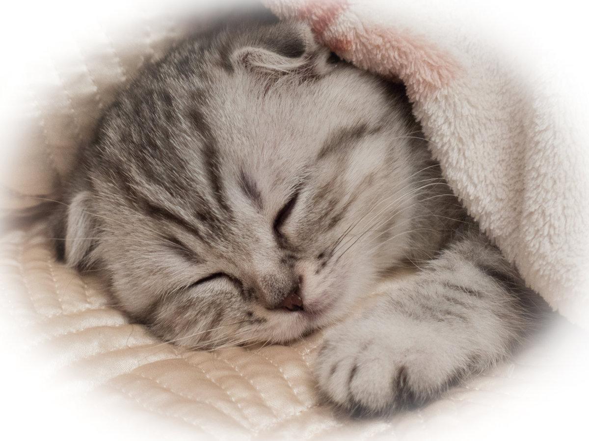 картинки сладко спящего остальной части тверской