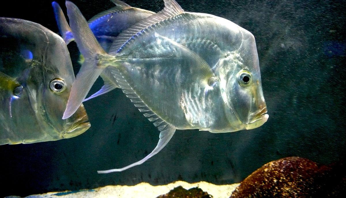картинки рыба свет ремонт дома заменой