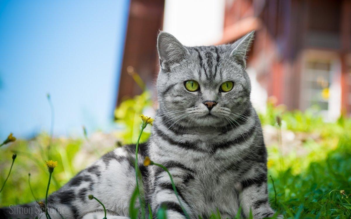большие красивые картинки кошек на рабочий стол