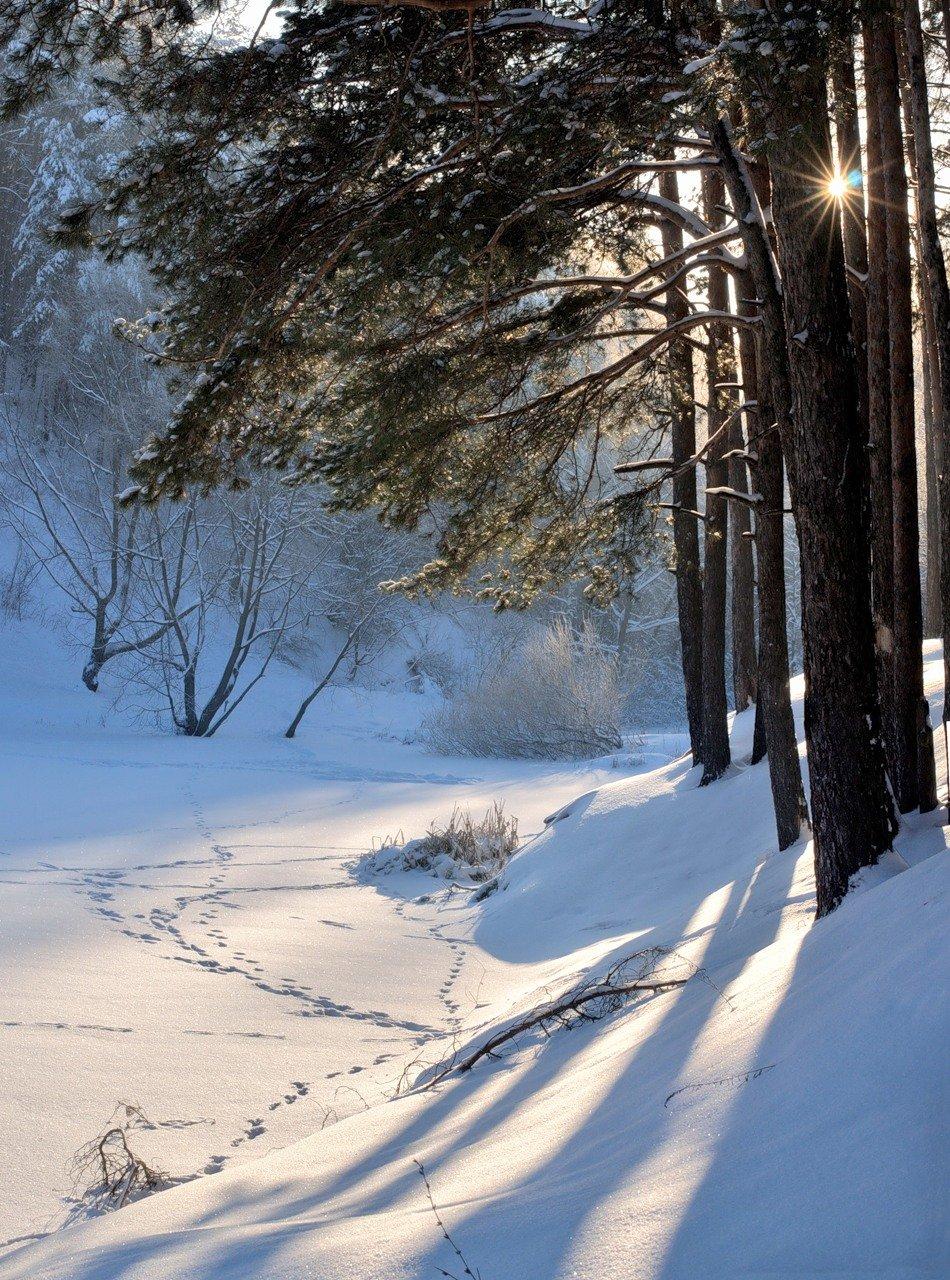 коллектива всегда лес в снегу под солнцем фото отцами детьми